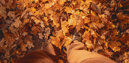 View from above of male legs wearing brown sneakers on ground with autumn leaves, illuminated sunlight. Pov photo