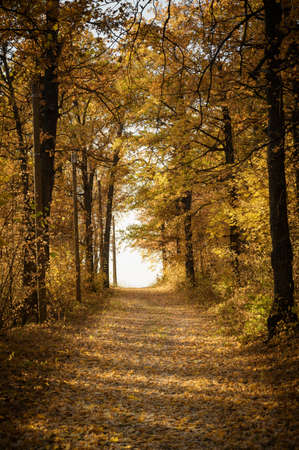 Forest trail with in colorful autumn woods with rays of warm sunlight. Hiking path in fall forest Banco de Imagens