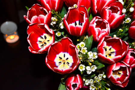 revealed: The revealed buds of tulips