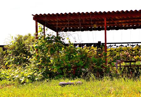 arbor: Arbor for rest in a garden
