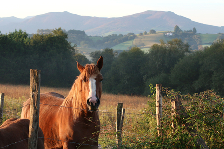 peaceful horse in the Basque country