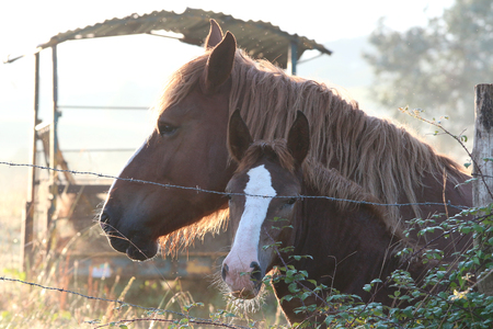 peaceful horse in the Basque country Banque d'images - 87942757
