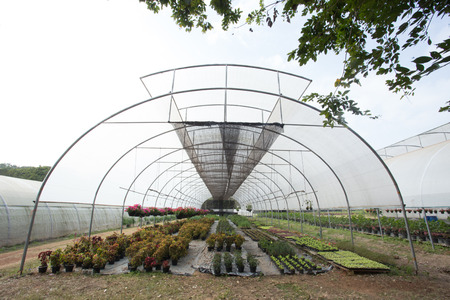 hydroponics: The hydroponics in greenhouses Stock Photo