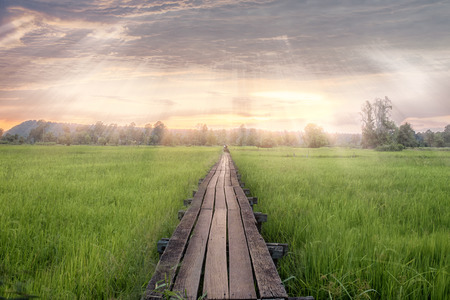 Wooden bridge to Green rice field in Thailand.