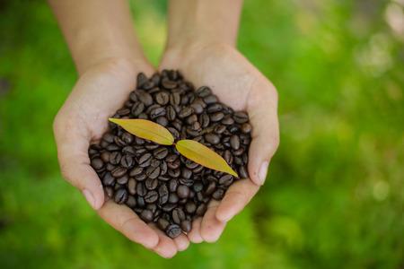 planta de cafe: Granos de café y plantas de café en las manos