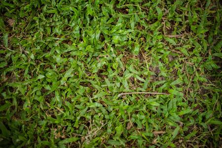 feild: Grass is a green feild