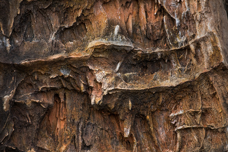 petrified fossil: The Petrified Wood Texture Background
