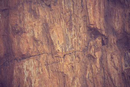 petrified: The Petrified Wood Texture Background vintage color