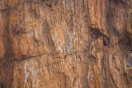 petrified: The Petrified Wood Texture Background