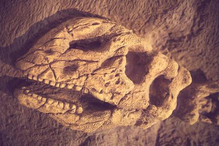 Dinosaur fossil vintage color