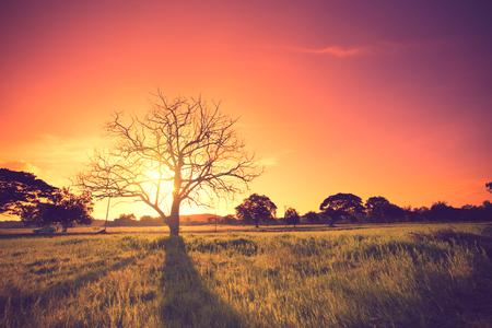 color in: roble viejo en la puesta del sol con el color de la vendimia sol