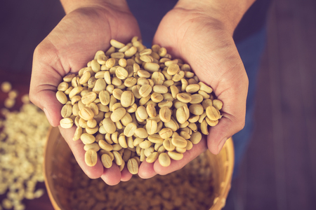 unroasted: green unroasted coffee beans on hand.Vintage Color Stock Photo