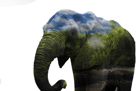 Double exposure elephant and forest Stock Photo