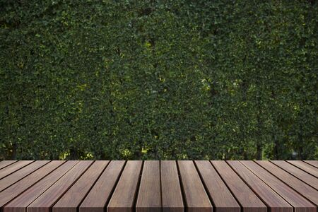 wooden floors: Old wooden decking and plant with wall garden decorative Stock Photo