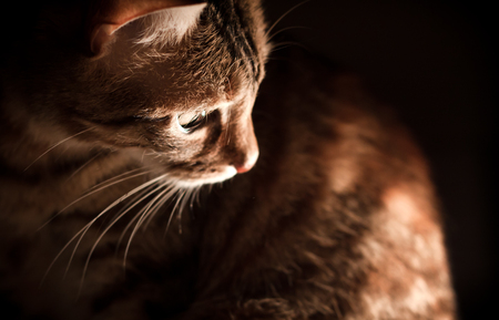 introspective: Beautiful Light and Cat Stock Photo