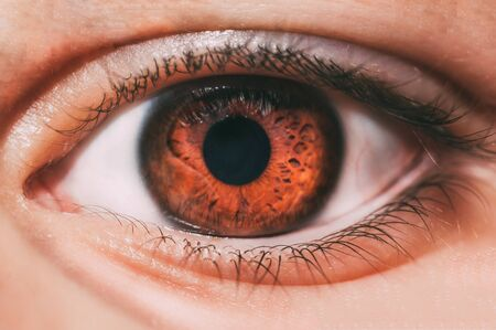 Brown eye of a woman in the foreground, macro photography. 版權商用圖片