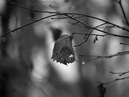 tough: Tough leaf in autumn for endurance  loneliness concept