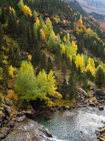 ordesa: Colorful forest and a river in the Pyrenees mountains in autumn (Ordesa National Park, Spain)