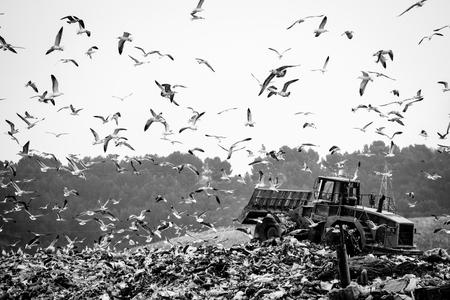 dumping: Garbage truck stirring trash at the dump