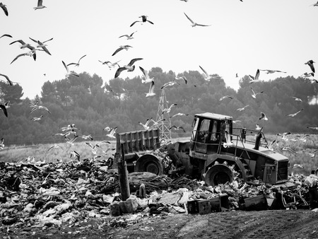 dump truck: Garbage truck stirring trash at the dump