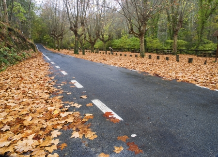 Road in autumn on a rainy day Stock Photo