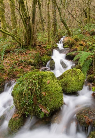 Small river in the forest, Fragas do Eume, Galicia, Spain
