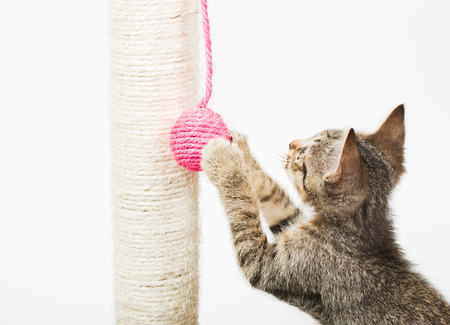 Small cat playing with a pink ball and isolated on white background photo