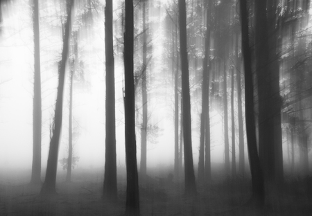 disturbing: Black and white photograph of a disturbing forest