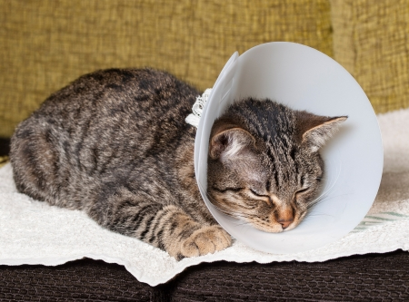Sleeping cat with an Elizabethan collar inside home Stock Photo