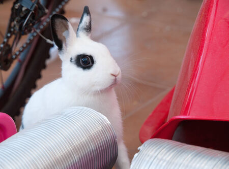 rabit: Little rabit at home