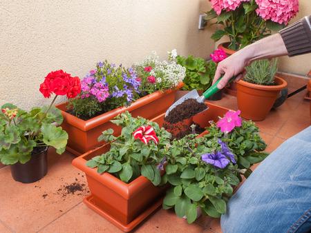 transplanting: Transplanting plants flowers in a terrace Stock Photo
