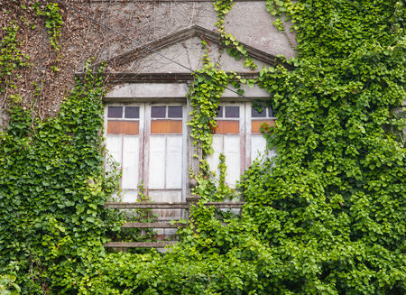 invaded: Abandoned house invaded by nature outdoors Stock Photo
