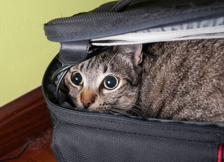 dilated pupils: Funny cat portrait wich is inside a bag at home