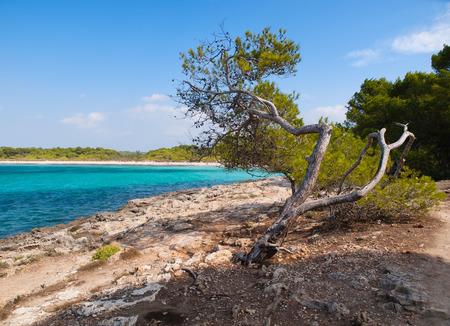 pine creek: Lone pine in Son Saura creek in Menorca, Spain.