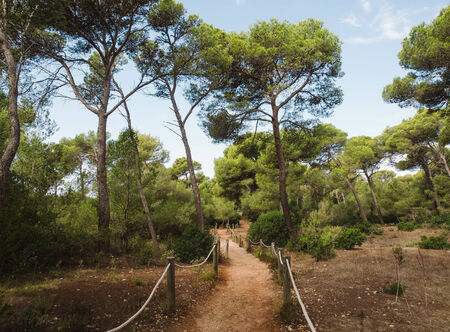 mediterranean forest: Path in mediterranean forest. This place is located in Menorca, Spain. Stock Photo