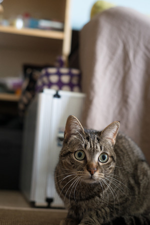agachado: Gato en su casa en la composición vertical. Cat está alerta.