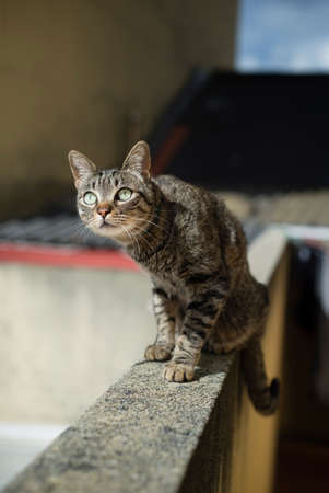 undomestic: Tabby cat on top of a wall on a sunny morning