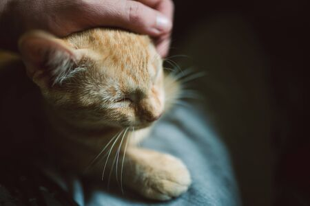 Human hand caressing a kitten at home photo