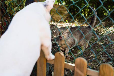 perro asustado: Gato silbidos contra un bulldog franc�s al aire libre Foto de archivo