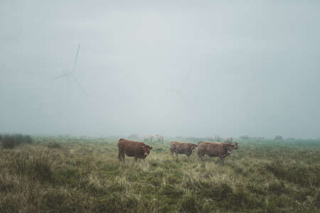 windturbines: Spain, Galicia, Ortigueira, Caws and windturbines in the fog Stock Photo