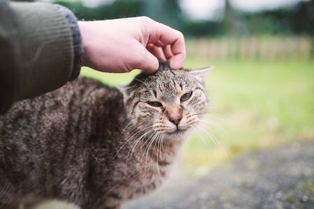 caresses: Cat being scratched by a human hand
