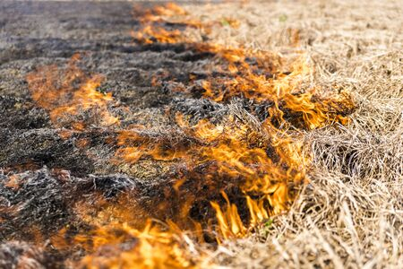 Burning of the remains of the agricultural crop xufa. Stock Photo