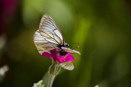 Butterfly on a pink flower in summer Banque d'images