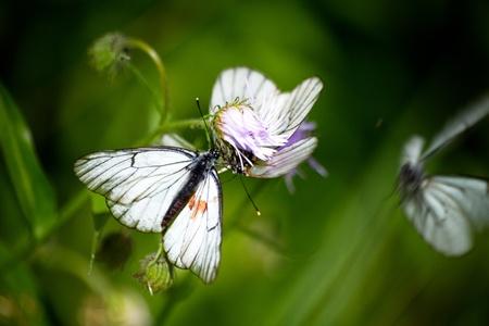 Beautiful butterflies on a flower in summer
