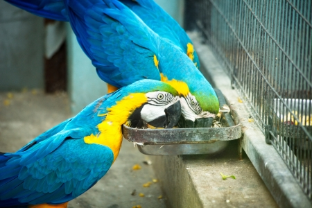Big blue parrots in the zoo in Shanghai