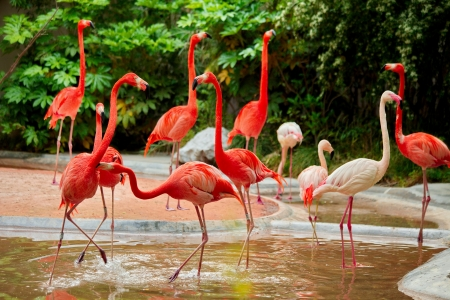 Pink flamingos at the zoo in Shanghai