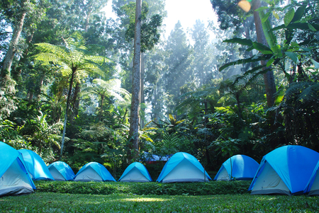 wildwood: Camping in the deep jungle Stock Photo