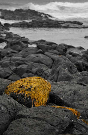 Algae covered rock on a rocky coastline with rough sea in the background