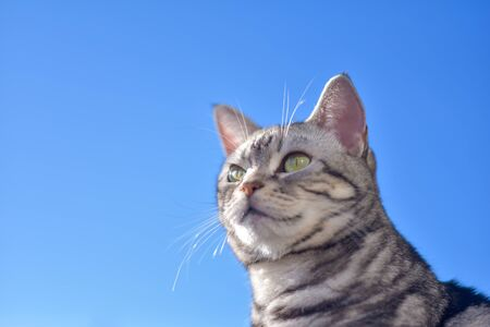 Cat and blue sky