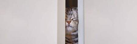 A cat that pushes the door open with his face and appears